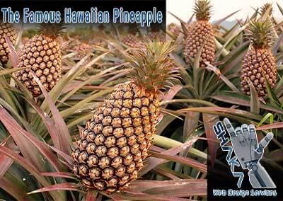 The Mystery Of The Famous Hawaiian Pineapple